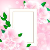 Greeting card pink flowers Stock Image