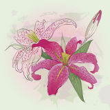Greeting card with pink lilies Royalty Free Stock Image