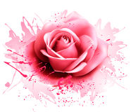 Greeting card with pink rose. Royalty Free Stock Image