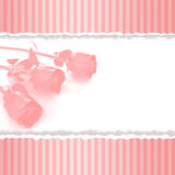Greeting card with pink roses on retro pink background Stock Image