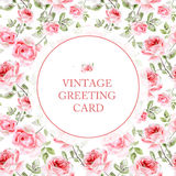 Greeting card with pink roses on white background. Stock Photo