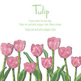 Greeting card with pink tulips. Polygon style. Vector illustration on white background Stock Images