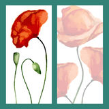 Greeting card poppies Stock Photos