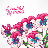 Greeting card with pretty pink pansies Royalty Free Stock Photos