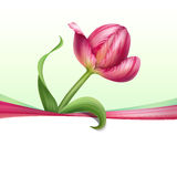 Greeting card with realistic pink tulip flower Stock Images