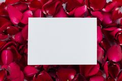 Greeting card red rose petals. with Blank Message Sign for Your Text or Message. Greeting card with a red rose petals and space for text using as love stock images