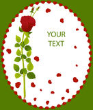 Greeting card red roses Stock Photography