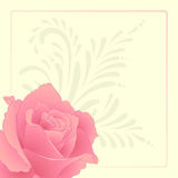 Greeting card with rose. Royalty Free Stock Images
