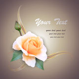 Greeting card with rose. Illustration Stock Photos