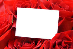 Greeting card with roses Royalty Free Stock Photos