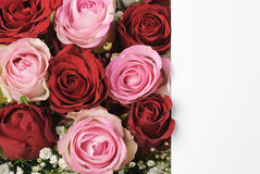 Roses and blank white paper space for your text Stock Images