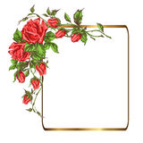 Greeting card with roses. Greeting card roses design. Ornate frame decoration with flower pattern. Festive vector illustration with roses for Happy Birthday Royalty Free Stock Images