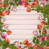 Greeting card with roses. EPS 10 Royalty Free Stock Photography