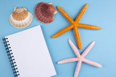 Greeting card with shells and starfishes and place for text Royalty Free Stock Photos
