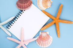 Greeting card with shells and starfishes and place for text Stock Image