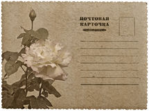 Greeting card with rose. Russian language Stock Photography