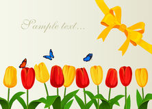 Greeting card with spring tulips and yelow bow. Vector illustration Stock Image