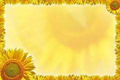 Greeting card with sunflowers. On a yellow background stock illustration