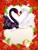 Greeting card with swans in love. Greeting card with roses and swans in love Stock Image