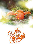 Greeting Card with Tangerines as Fir-tree Toy and Branch of Spruce on White Snow Stock Photos
