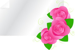 Greeting card template with roses. Template for your design with three pink roses and swirl ornament Royalty Free Stock Photos