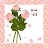 Greeting card three pink roses Royalty Free Stock Images