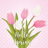 Greeting card with tulip flowers Stock Photos