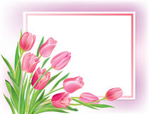 Greeting card with tulips Royalty Free Stock Image