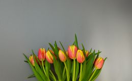 Greeting card with tulips against light grey wall background. Red and yellow tulips at the bottom of the frame. Copy space for. Text royalty free stock photography