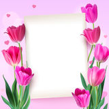 Greeting card with tulips around the sheet of paper with text on pink background. Realistic flowers tulips with petals. And leaves, festive composition Royalty Free Stock Image