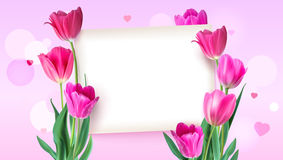 Greeting card with tulips around the sheet of paper with text on pink background. Realistic flowers tulips with petals. And leaves, festive composition Stock Photo
