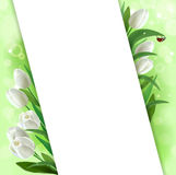 Greeting card with tulips. Greeting card with flowers and ladybug Royalty Free Stock Photo