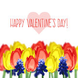 Greeting card with tulips, mouse hyacinth and text happy valentine's day Stock Images