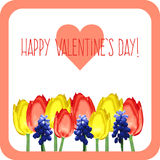 Greeting card with tulips, mouse hyacinth and text happy valentines day Stock Photo