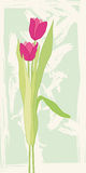 Greeting card with tulips. Vector illustration Royalty Free Stock Photos