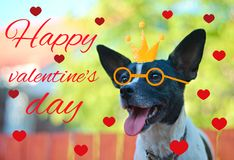 Greeting card for Valentine`s day, with a cute pug. Cartoon dog with crown and glasses and heart. illustration for a postcard or. Greeting card for Valentine`s stock photos