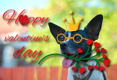Greeting card for Valentine`s day, with a cute pug. Cartoon dog with crown and glasses and heart. illustration for a postcard or. Greeting card for Valentine`s stock images