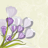 Greeting card with violet Royalty Free Stock Photography