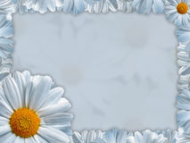 Greeting card with white chamomile. Spring daisy stock illustration
