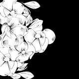 Greeting card with white flowers. Black and white illustration Royalty Free Stock Images