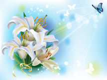 Greeting card with white lilies. And butterfly Royalty Free Stock Image