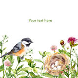 Greeting card with wild herbs, bird and nest. Watercolor Royalty Free Stock Photography
