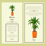 Greeting card with yucca plant. Greeting card with yucca decorative plant, square frame. Vector illustration royalty free illustration
