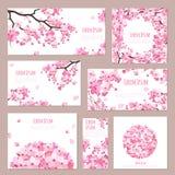 Greeting cards with blossoming sakura Stock Photos