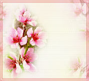 Greeting floral card with peach flowers and frame Royalty Free Stock Photos