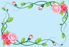 Greeting floral rose card Stock Image