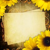 Greeting grunge card with bunch of sunflowers Royalty Free Stock Images