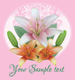 Greeting or invitation card with bouquet flowers of lilies with buds on the background of floral ornament Royalty Free Stock Photos