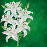 Greeting or invitation card with bouquet lily flow Royalty Free Stock Photography