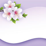 Greeting or invitation card with branch of sakura. Beautiful abstract background purple with place for text. Stylish vector wallpaper. Vector illustration vector illustration